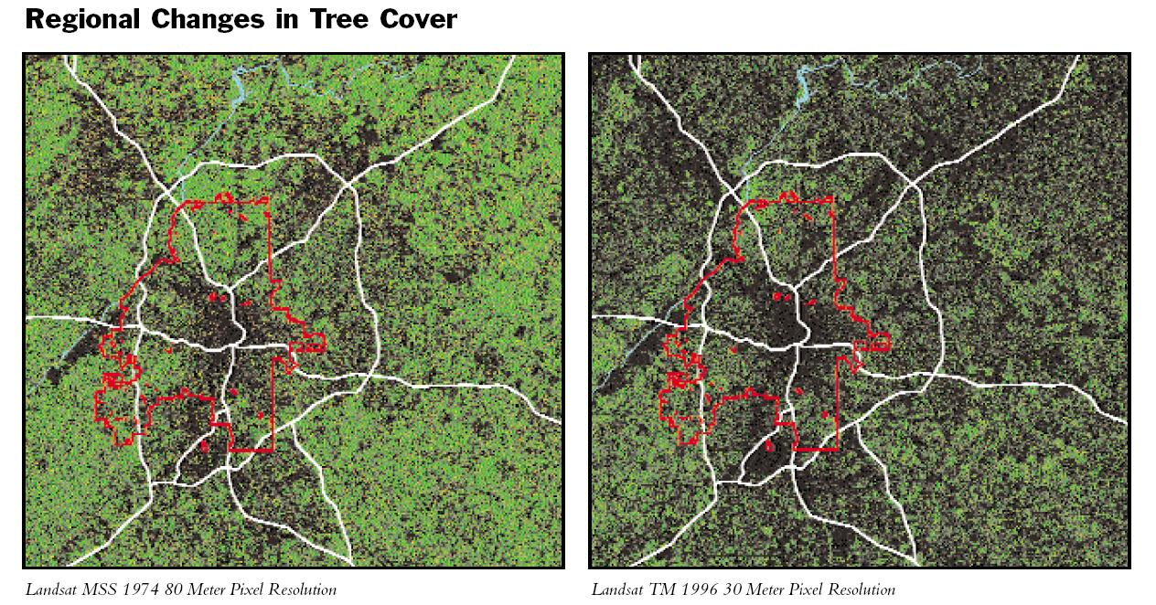 Tree_Cover_Changes & Changes in Atlantau0027s Tree Canopy