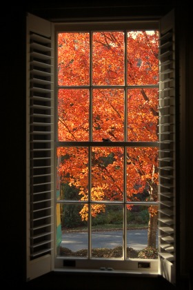 fall tree through window